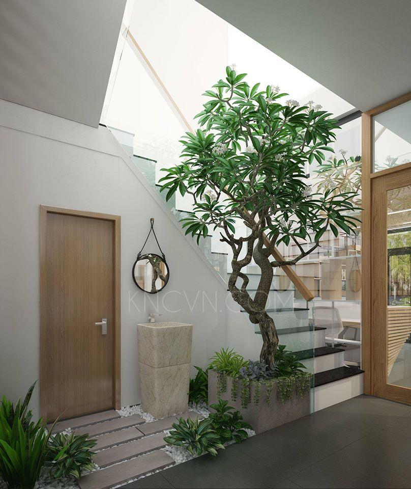 Thiết kế vườn trong nhà và những ưu điểm - Ảnh: Internet